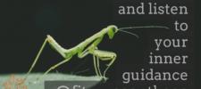 Message 1: The Praying Mantis